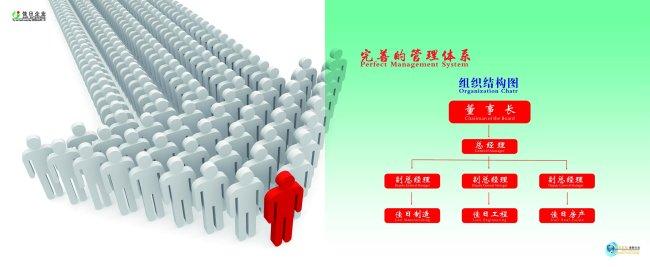 企业画册组织结构