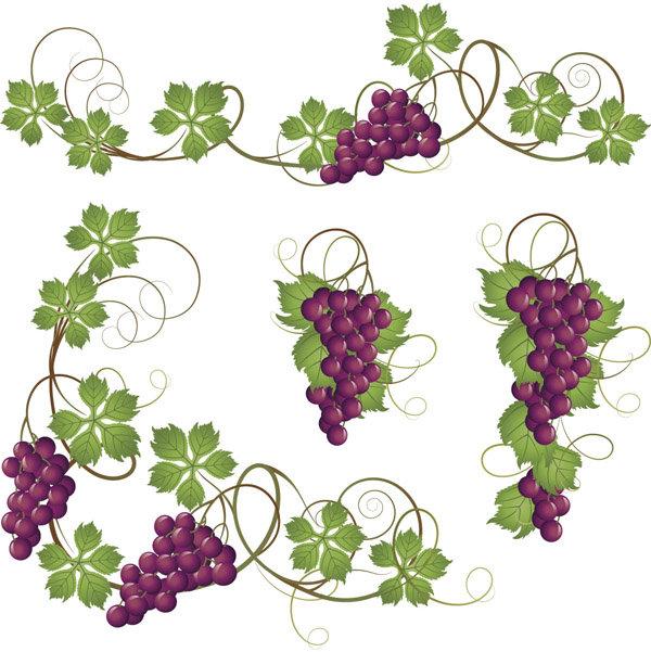 葡萄花纹边框