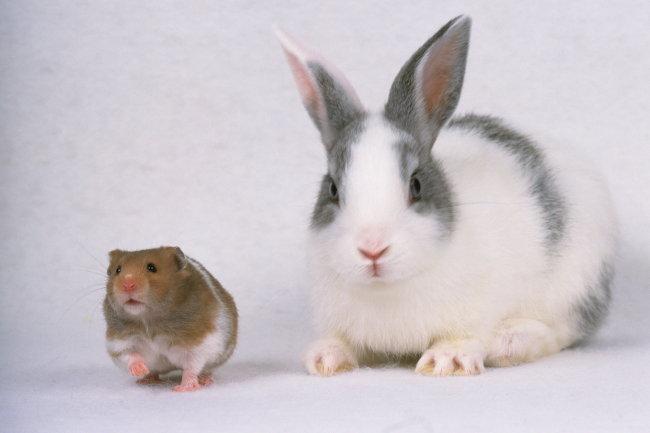 图片高清小兔小兔动物小兔图片兔子免费下载_jpg花蚊子咬了多久能好图片
