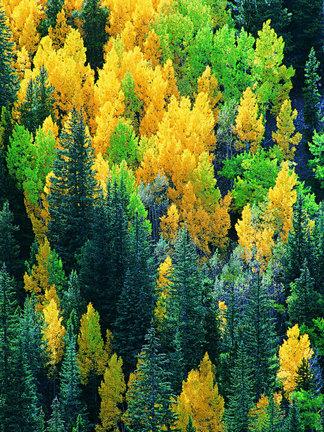 <i>森</i><i>林</i> <i>树</i><i>木</i> <i>树</i><i>木</i><i>剪</i><i>影</i> <i>树</i><i>木</i>植物