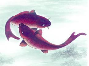 中国风水墨画鱼