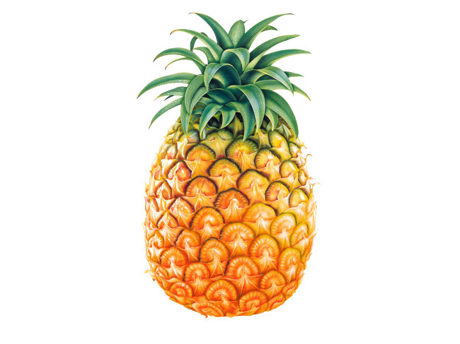 手绘菠萝图片素材免费下载-千图网www.58pic.com