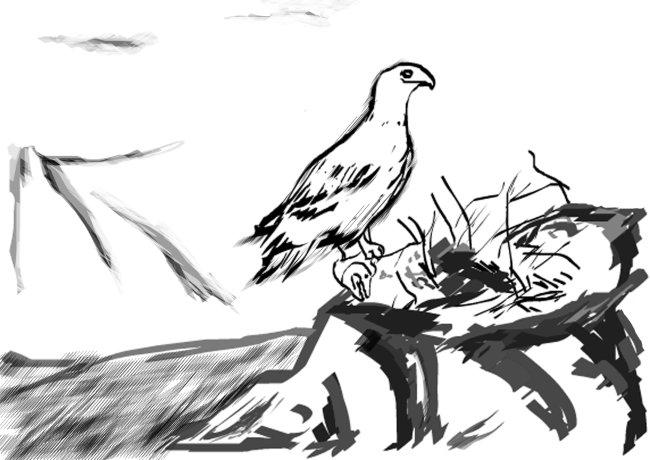 动物图片 植物背景 动物植物素材 鸟窝 鸟巢 鸟类 山水 山水风景