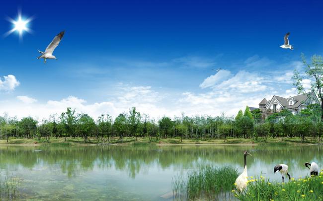 蓝天清水飞鹤