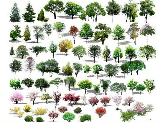 手绘立面树木素材
