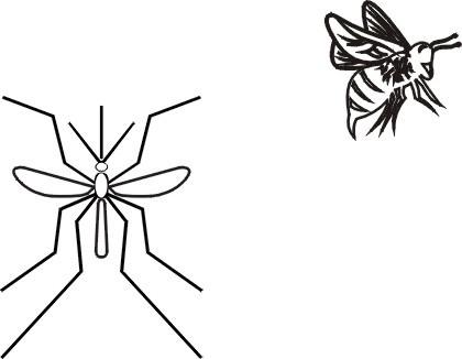 蚊子简笔画步骤