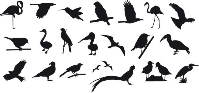 鸟类 飞行类 动物类
