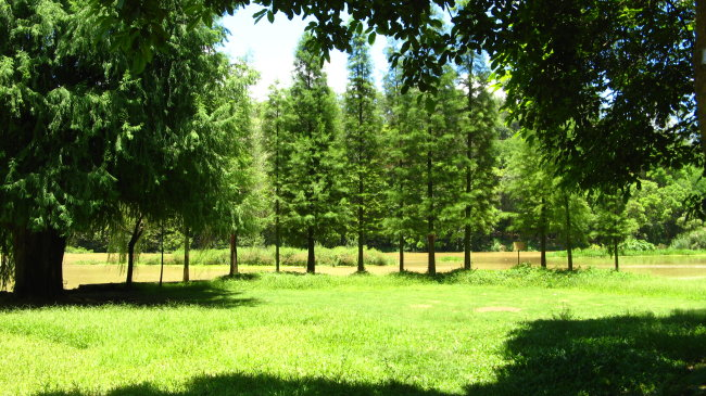 绿树风景美丽的风景 漂亮的小树     黑色