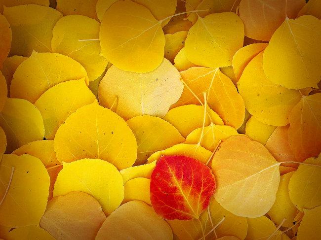 背景素材 背景图片 背景底纹 背景图案 背景风景 树叶 银杏树叶