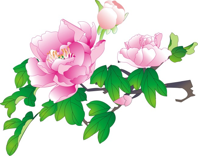 牡丹花素材
