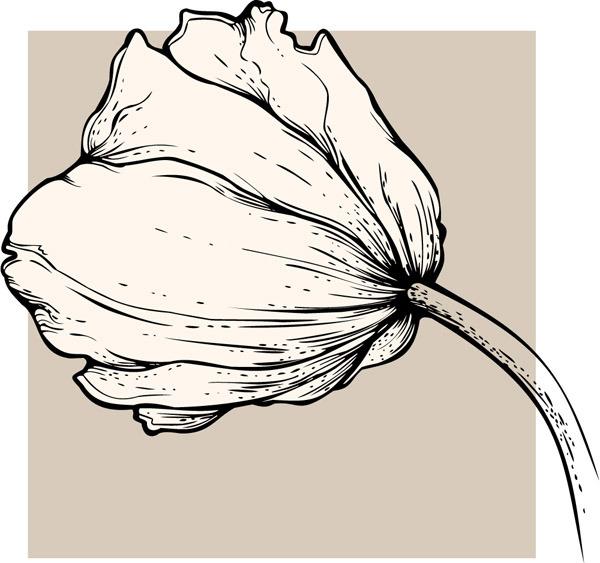 手绘线条花