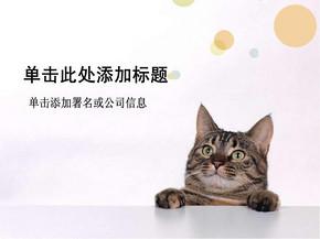宠物猫PPT素材