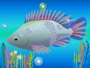 鱼类动态PPT演示文稿