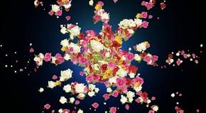 花瓣led视频素材