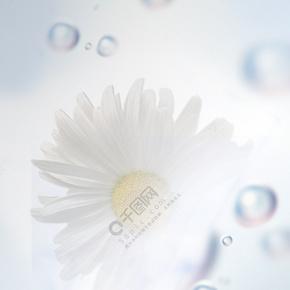 简单化妆瓶野菊花背景