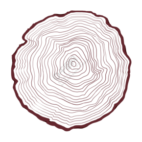 木桩横切面图
