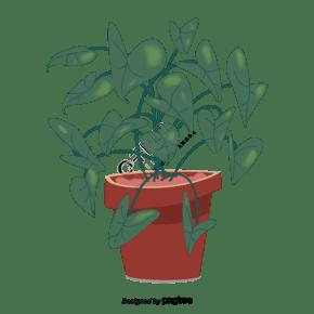 叶子是爱心形状的盆栽