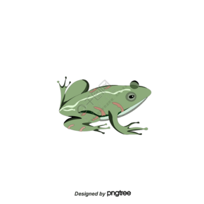 绿色动物小清新青蛙