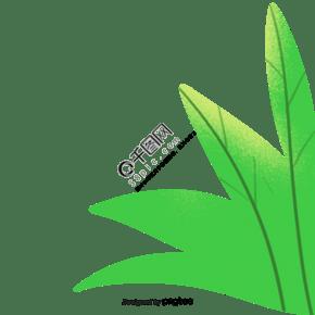 綠色植物葉片綠葉