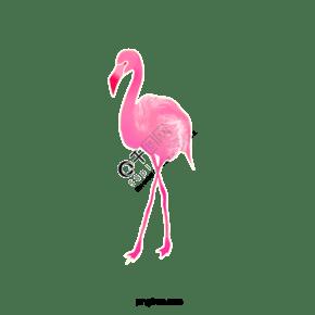 手繪粉色火烈鳥插畫元素