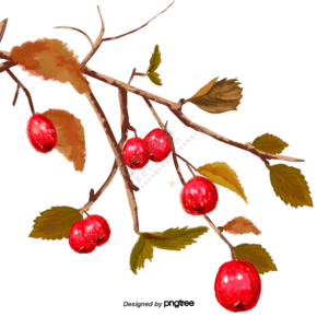 结着果子的果树树枝