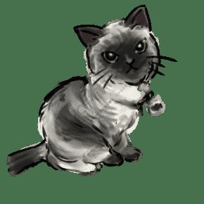 手繪喜馬拉雅貓插圖