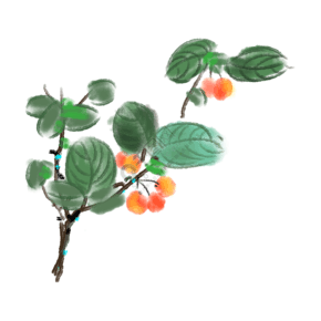 黄色的樱桃树插画