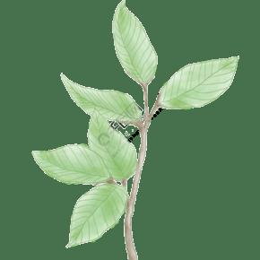春天樹葉綠色清新可愛手繪元素