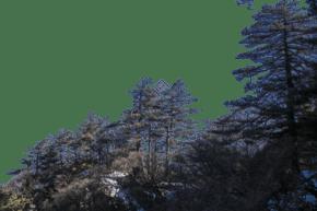 風景秀麗樹木旺盛的山峰