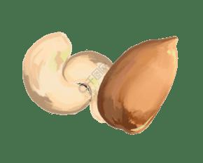 健康食品腰果插畫