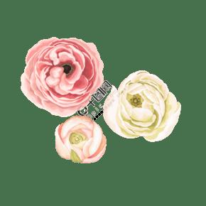 水彩风小清新手绘花朵