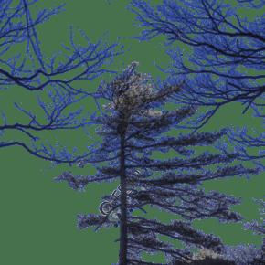 冬季荒蕪蕭條的大山