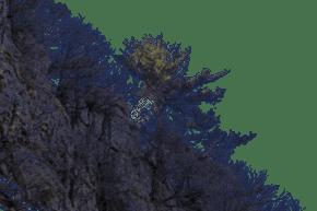 陡峭險峻植被茂盛的山峰