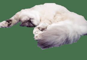 一只正在睡覺的小懶貓
