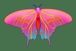 彩色昆虫蝴蝶插画