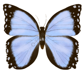 昆虫蝴蝶扇贝