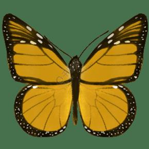 昆虫蝴蝶黑脉金斑