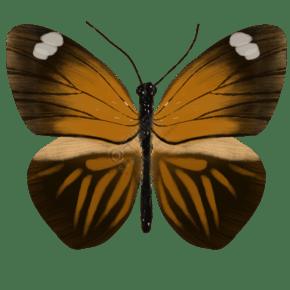 昆虫蝴蝶峡