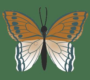 蝴蝶标本装饰