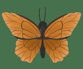 唯美风蝴蝶标本