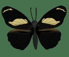唯美蝴蝶设计