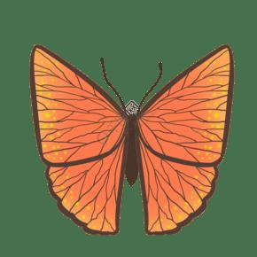 昆虫蝴蝶橙色