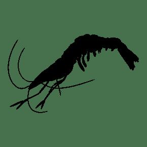 跳动的小虾手绘插画