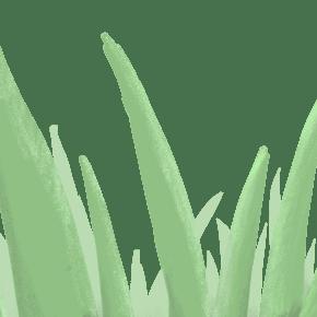 小清新卡通手绘植物芦苇矢量元素