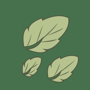 三片桑树叶子舒适春季