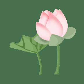 手绘粉色荷花插画