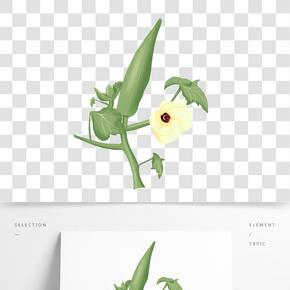 植物秋葵花成長過程