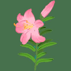 粉红色的百合花插画