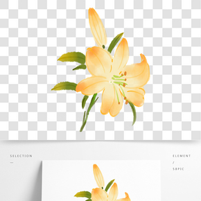 淡黃色的百合花插畫