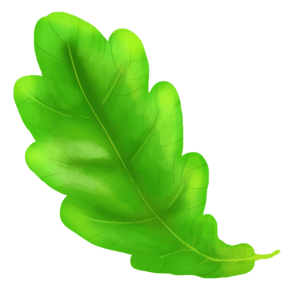 一片漂浮的树叶插图